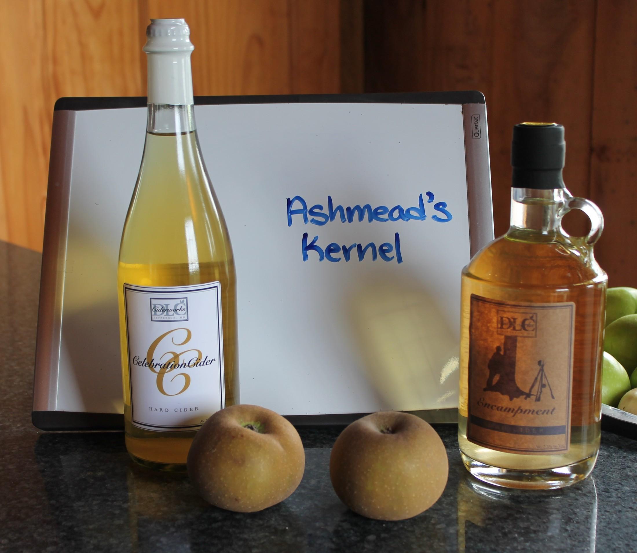 Ashmead's Kernel