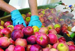Burkittsville Couple Working Hard at Planting, Growing, Orchard Business