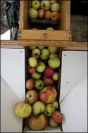 Distillery Lane Ciderworks, Apple Picking and Cider Pressing