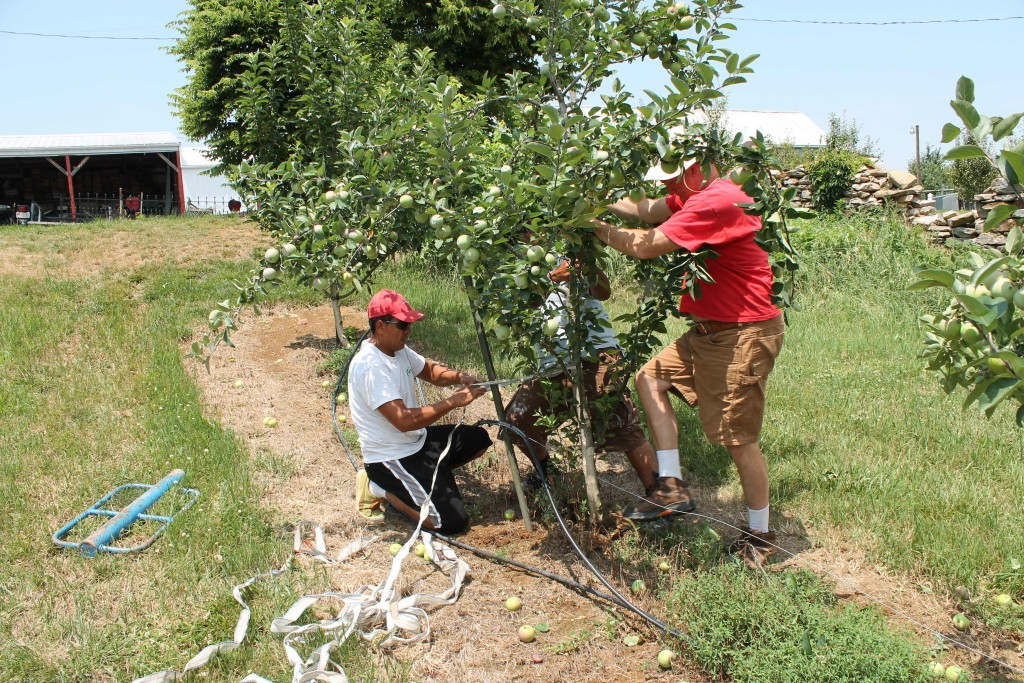 apple farm repairs storm damage