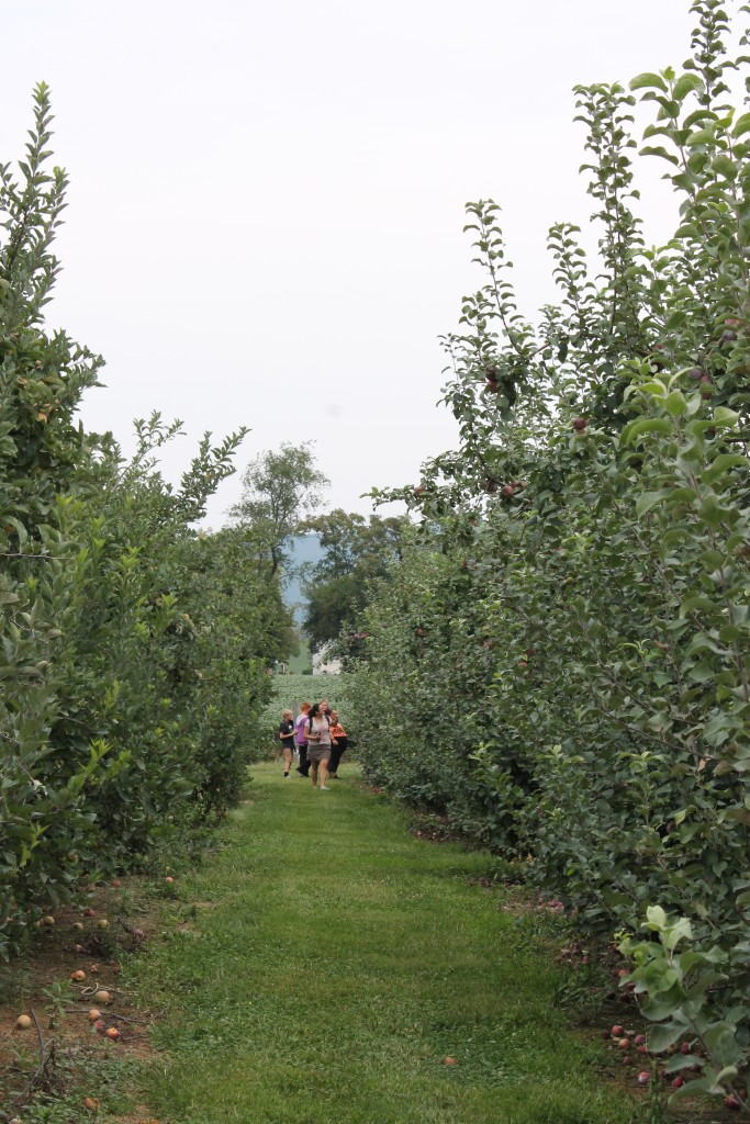 walking farm tour and apple picking
