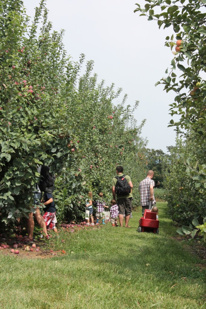 walking farm tour and apple picking